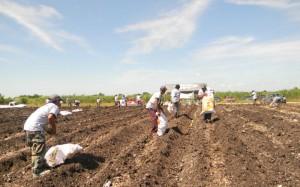 Farmer-Field-School-2