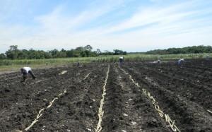 Farmer-Field-School-3
